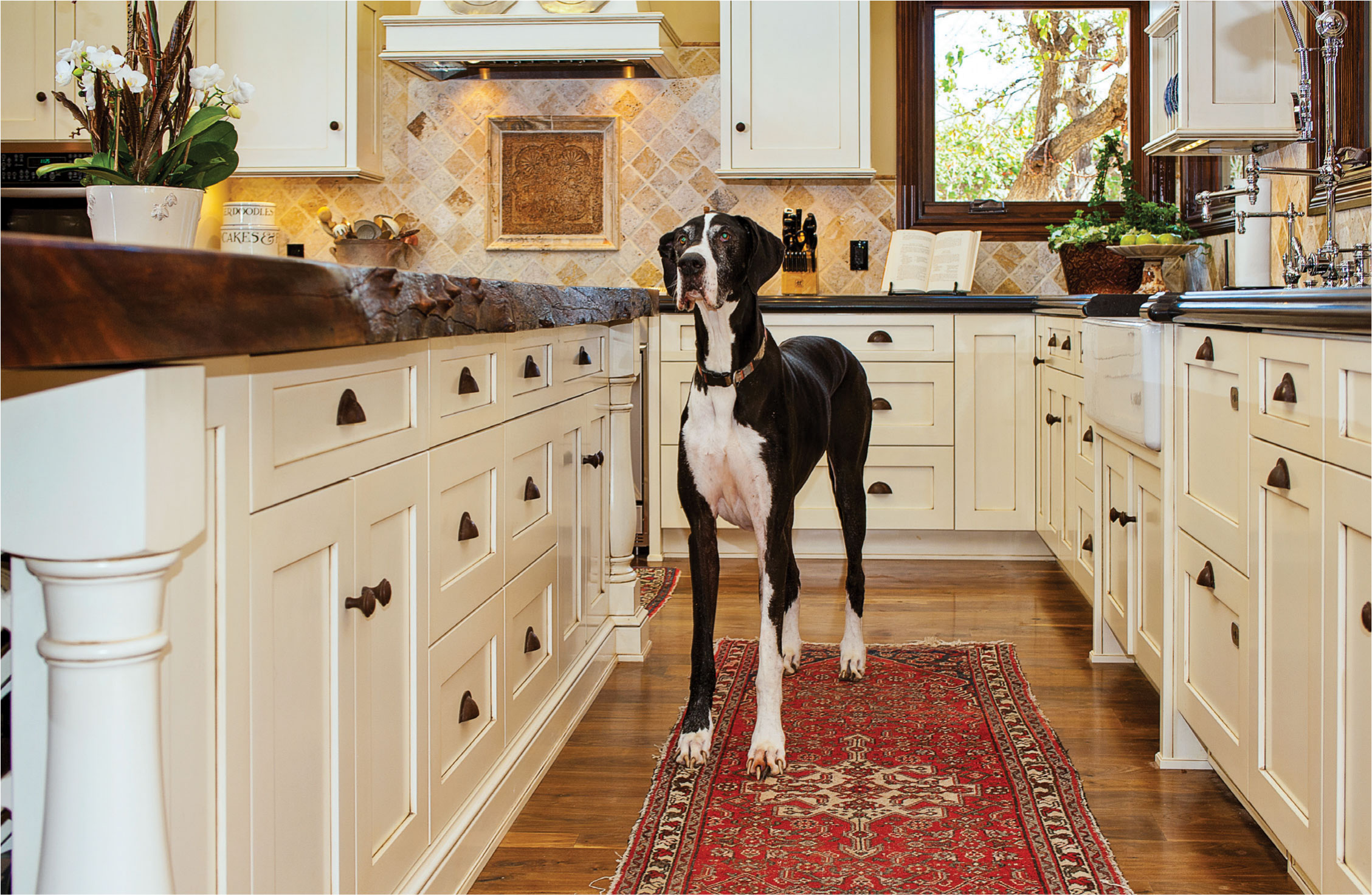 Dog Standing in Fitucci Custom Kitchen